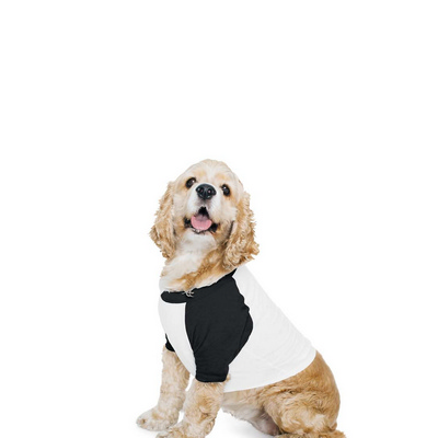 American Apparel Dog Poly-Cotton 3/4 Sleeve Raglan T-Shirt Colours (BB953W_COLOURS_GILD)